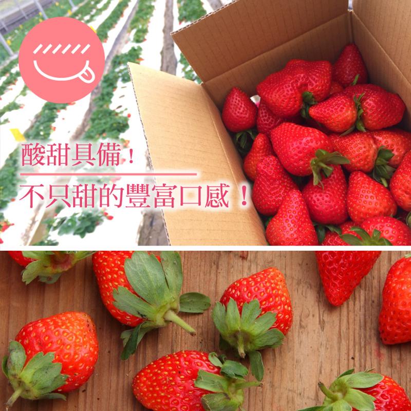 台灣爆汁酸甜新鮮草莓,限時破盤再打8折!