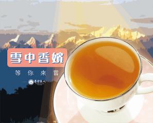 台灣茶人雪峰大吉嶺茶包,限時4.3折,今日結帳再享加碼折扣