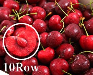 美國10Row紅寶石櫻桃,今日結帳再打85折