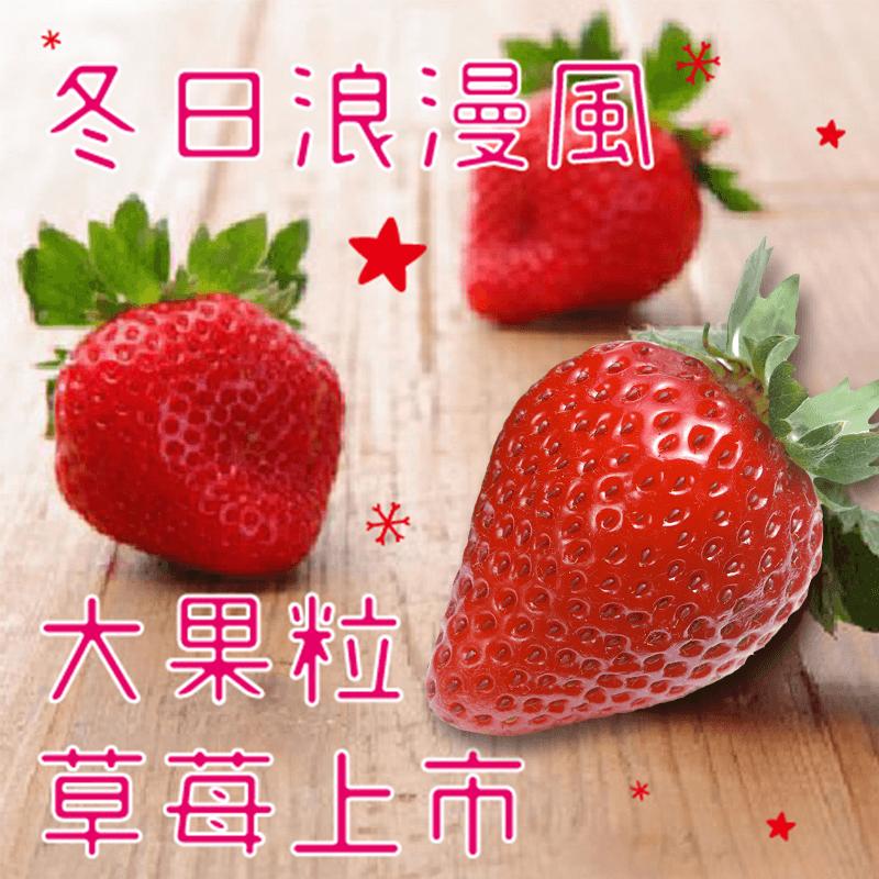 大果粒高級美味日本草莓,今日結帳再打85折!