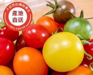 溫室彩色寶石五彩小蕃茄,限時4.0折,今日結帳再享加碼折扣