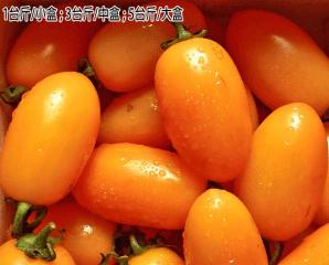 高雄美濃特產黃金小番茄,限時3.6折,今日結帳再享加碼折扣