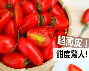 苗栗頂級溫室蜜3小蕃茄,今日結帳再打88折