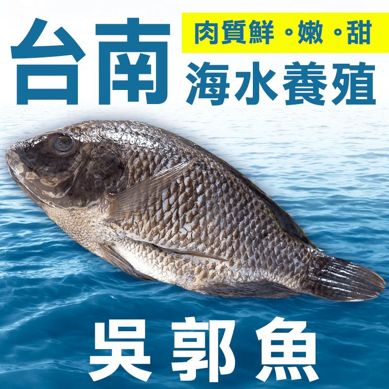 台灣新鮮超大海水吳郭魚,限時破盤再打8折!