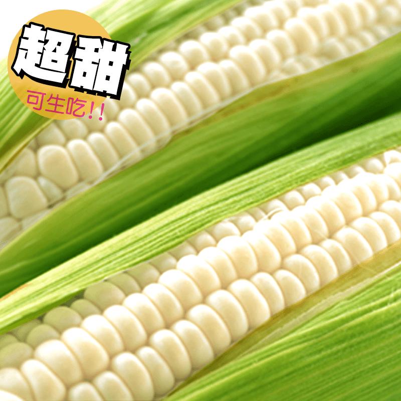 鮮採超大支牛奶水果玉米,今日結帳再打85折!