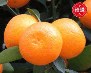 驚豔迷你黃金爆汁砂糖橘,限時8.7折,今日結帳再享加碼折扣