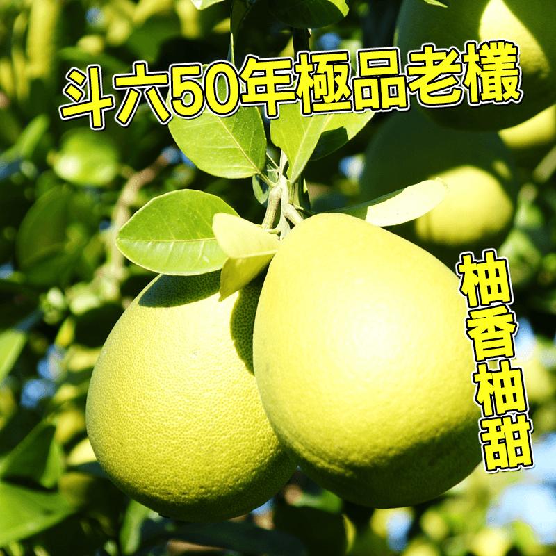 斗六正宗50年文旦禮盒,今日結帳再打85折!