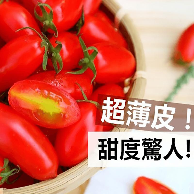苗栗頂級溫室蜜3小蕃茄,本檔全網購最低價!